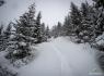 Trailløb Steiroheia i sneen