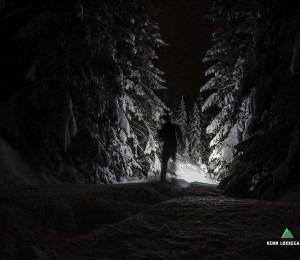 Løber ind i den tætte skov som er dækket af store snemængder.
